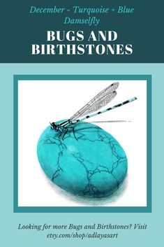 Can you believe it's almost December? Where has the time gone? I think December's Bugs and Birthstones drawing is one of my favourites - I just love the colour! What do you think? #Bugsandbirthstones #birthstoneartprint #birthstoneart #decemberbirthstone #turquoisebirthstone #turquoiseartwork #turquoisegemstone #dragonflyprint #bluedragonfly #gemstoneartwork #decemberbirthday #art #artist #artofinstagram #artistoninstagram #artoftheday #colouredpencil Animal Art Prints, Animal Drawings, Turquoise Birthstone, Spider Art, December Birthday, Last Minute Christmas Gifts, Blue Dragonfly, Happy New Year Everyone, Color Pencil Art