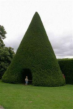 Tree pee #Topiaries
