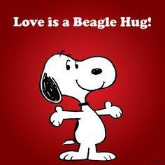 Love is a Beagle Hug!