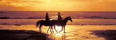 Horseriding through vineyards and along beaches in Europe