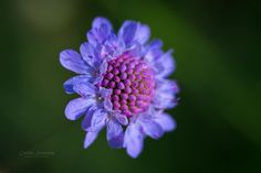 Blue sun by nemi1968
