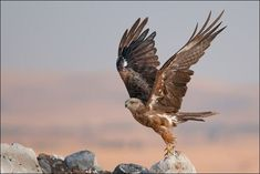 Birds fascinate a lot of people, be it the birdwatchers or just a stray man wandering. Bird photography is surely not a piece of cake. Imperial Eagle, Most Beautiful Birds, Blue Heron, Birds Of Prey, Bird Watching, Natural Wonders, Graphic Design Inspiration, Predator, Bald Eagle
