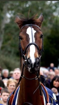 Race Horses, Horse Racing, Star Wars, Melbourne Cup, Kentucky Derby, Equestrian, Stars, Travel, Animals
