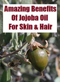 Wonderful Benefits Of Jojoba Oil For Skin And Hair.   Jojoba oil is 100% pure magic and is one of the oils that have the best affinity to human skin, and is a moisturizer par excellence and can be used neat on extra-dry and flaky skin, to help restore elasticity and smoothness. Jojoba oil is also a wonderful natural remedy for the skin.