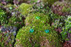 Musgo mágico. Creación de un manto de musgo: http://verlorenspirale.blogspot.mx/2014/06/creacion-de-un-pequeno-jardin.html