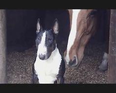Horse and Bull Terrier, solid buds, because why not?