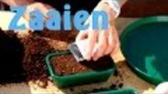 Hoe kun je planten zaaien? Belangrijke zaaitips voor beginners. - Instructies - Weethetsnel.nl