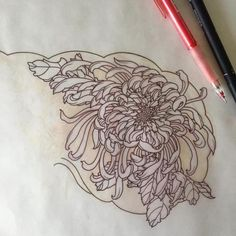 Image result for chrysanthemum tattoo More