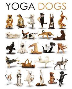 Yoga - Dogs - Affischer på AllPosters.se