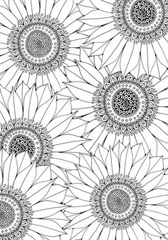 Sunflower Free Pattern Download #AdultColouring #FreeDownload