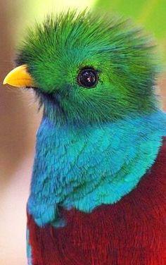 Exotic bird. Inspiratie voor theater: www.desteenakker.nl what a precious baby.
