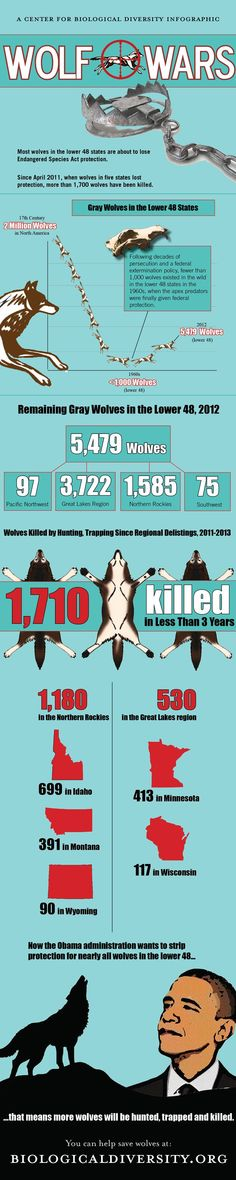 """""""Wolf Wars"""" Infographic. #animals #wolves"""