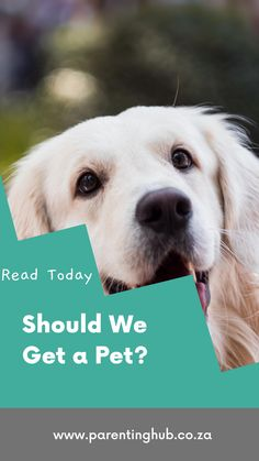 "Every parent has heard these words ""Please can we get a pet?"" Children are drawn to animals and just love to play and cuddle with them. Pets however, are a huge responsibility so you need to make sure the whole family is ready for the commitment. Here are some questions for you to ask and answer before you make your decision."