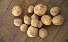 We tested easy ways to plant potatoes in containers and straight in the ground.