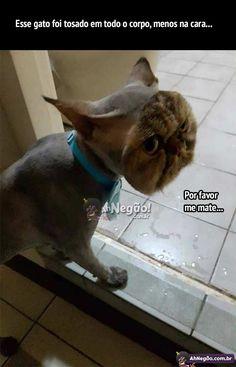 A pior tosa de um gato na história | UHAUHEUAEHUEAHAEU parece um bicho qualquer com uma máscara de gato. Mano ele tá pistolaço HAUAHEUEAHUEAHEAU.