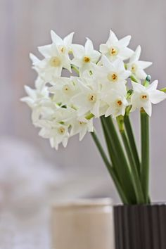 Tiny Blooms-# 3 -Paperwhites-Ingrid Henningsson-Of Spring and Summer