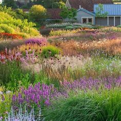 """Clive Nichols on Instagram: """"Another of my photos from the new book, English Gardens by Kathryn Bradley-Hole. Incredible planting by Piet Oudolf at Hauser & Wirth,…"""""""