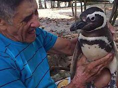 O pedreiro João Pereira de Souza encontrou o pinguim Dimdim em 2011, encharcado de óleo na praia perto de sua casa, no Rio de Janeiro. Para salvar o animal, João lavou a ave até não ter mais nenhum resíduo da sujeira. Desde então, o animal não largou mais ele.