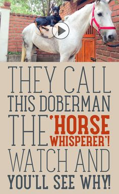 They Call This Doberman The Horse Whisperer! Watch and You'll See Why!!