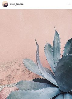 Gray-blue-green barbed succulent  (century plant?) against warm, pale pink stucco wall...bold, graphic photo