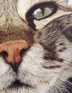 Artists who take close-ups - MORE Beautiful Cats - . - Artists who take close-ups – MORE Beautiful Cats – - Art And Illustration, Illustrations, Cat Drawing, Kissing Drawing, Animal Paintings, Beautiful Cats, Crazy Cats, Pet Portraits, Cat Art