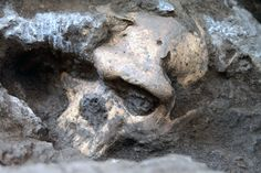 It's a discovery that could change our understanding of early humans. A 1.8-million-year-old skull from Dmanisi, Georgia suggests that early...