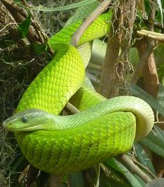 """I was like a green mamba snake. Poisen. I could be right next to you and you wouldn't know it."""