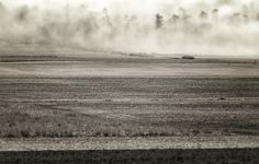 Misty © Merle Nienhuis | Google+
