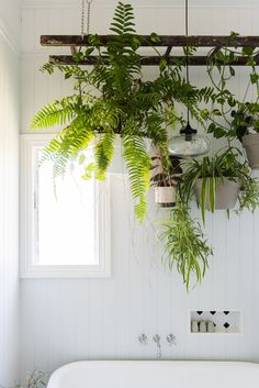 """Katie has to be careful with her indoor plants, as her cats love to play with them! These on the hanging ladder above the tub are safe from their sneaky paws. """"This project took my dad a full day of measuring, re-measuring and measuring again. He did a fantastic job and perfectly executed my big idea."""""""