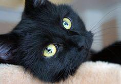 big yellow eyes