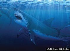 Megalodon, Prehistoric Shark, Called 'Apex Predator Of All Time' (VIDEO)