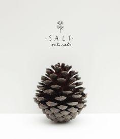 Branding by Ryn Frank. SALT