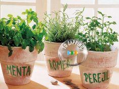 Cómo Cultivar Romero Perejil Y Menta En Casa. Hoy os damos la idea de cultivar en casa vuestras propias plantas aromáticas culinarias. Cuando las cultivamos