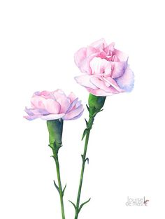 Carnation print of watercolour painting C12016 A3 by LouiseDeMasi