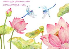 Wedding Clipart Watercolor pink lotus flowers by CornerCroft