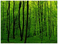 Green Is Green by ~JeanFrancois, Photography / Animals, Plants & Nature / Landscapes©2006-2012 ~JeanFrancois