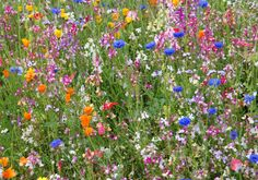 i've been stressing about what to put in my flower bed for months now... decided wildflower seed was the way to go. beautiful and low maintenance. At least outside the south & west fences