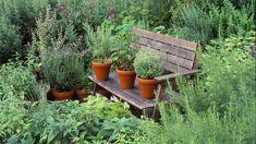 plantas como cultivar - Pesquisa Google