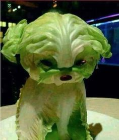 Lettuce Puppy Will Make You Swear Off Vegetables - Food Carving Ideas Veggie Art, Fruit And Vegetable Carving, Veggie Food, Food Design, Cute Food, Good Food, Awesome Food, Creative Food Art, Food Sculpture