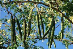 Top 14 Health Benefits of Moringa
