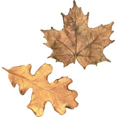 These two vintage realistic leaf pins appear to be genuine bronzed leaves. One is a maple leaf and the other is from an oak. Perfect for fall and