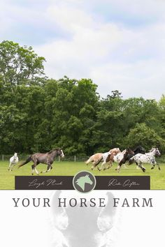 I started out with one horse when I was quite young... While other kids counted their quarters for doing jobs around the house, I was counting the hours that I could go home from school and ride. I earned my horse by doing barn chores, making dinners throughout the week and doing some house cleaning for my parents... (continue reading) #horses #financing #yourhorsefarm #equestrian #lifestyle #blog #budgeting #planning #yhf