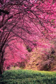 Enjoy the spring! by Hanson Mao on 500px