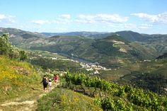 Uma das actividades mais interessantes para fazer no Douro é o trekking entre Provesende e o Pinhão, o chamado Trilho S. Cristóvão do Douro. Pode-se combinar este pequeno trekking com uma visita à aldeia vinícola de Provesende, o local onde se inicia o trek. O trek tem pouco mais de 4 quilómetros e demora entre …