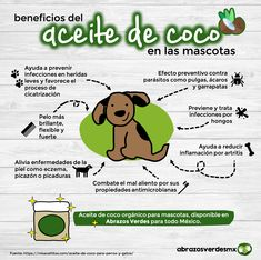 Benefits of Coconut Oil in pets - Why is it good for dogs and cats to consume coconut oil daily? Animals And Pets, Cute Animals, Pug, Dog Branding, Puppies Tips, Dog Hacks, Bull Terrier, Terrier Puppies, Diy Stuffed Animals