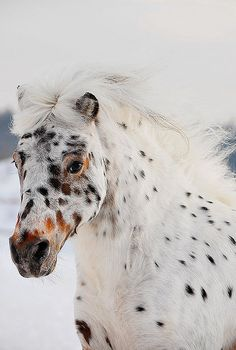 What amazing markings. You just know his/her name is Freckles....or Spot....or Polka Dot...or...