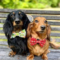 Singapore   Dog Harness   Personalized Dog Bandana   Custom Bowtie Custom Dog Tags, Cat Bow Tie, Pet Tags, Dog Bowtie, Puppys, Dog Harness, Dog Bandana, Dog Accessories, Cute Dogs