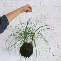 Zboží prodejce P0TMĚCHUŤ / Zboží   Fler.cz String Garden, Plants, Plant, Planets