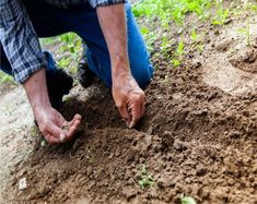 The system begins with a focus on healthy soil, which supports healthy plants. When plants are strong, they are naturally disease and pest resistant. Types Of Tomatoes, Types Of Vegetables, Gutter Garden, Small Vegetable Gardens, Starting Seeds Indoors, Bottle Garden, Help The Environment, Beach Gardens, Garden Trellis