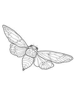 Click to see printable version of Flying Cicada coloring page